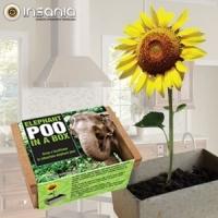 Eco, Natureza, Plantas, Planta em Casa, Primavera, Flores, TOP10Abril14, Amigo secreto, Em familia, Dia da Crian�a