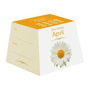 Flores de Aniversário - Abril (Entrega em 24h)