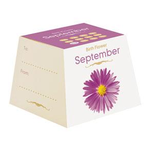 Flores de Aniversário - Setembro (Entrega em 24h)