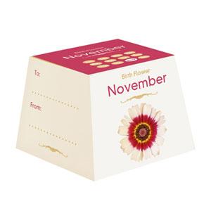Flores de Aniversário - Novembro (Entrega em 24h)