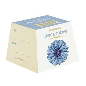Flores de Aniversário - Dezembro (Entrega em 24h)