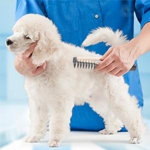 Pente Elétrico Corta-nós para Cães Comb %26 Cut (Entrega em 24h)